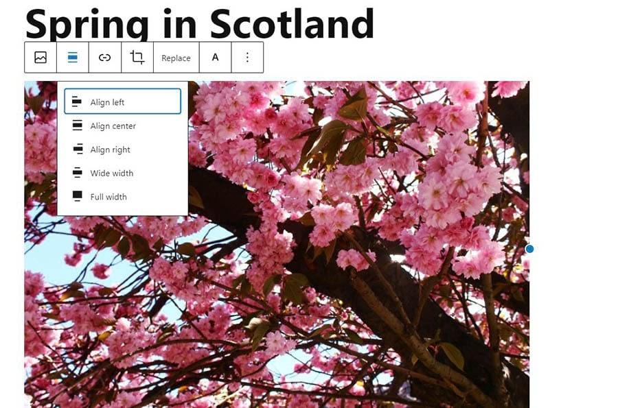 Aligning an image in WordPress.